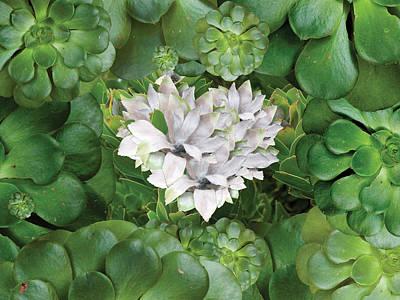 Alixandra Mullins Photograph - White Green Flower by Alixandra Mullins