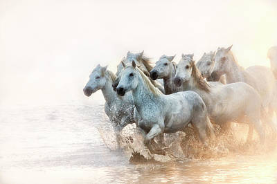 White Horses Of Camargue Running Print by Sheila Haddad