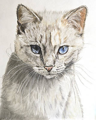 Domestic Short Hair Cat Painting - White Kitten With Blue Eyes by Kate Sumners