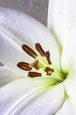 Springtime Photograph - White Lily Close Up by Garry Gay