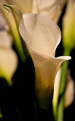 Floral Photograph - Calla Lily by James Chesnick