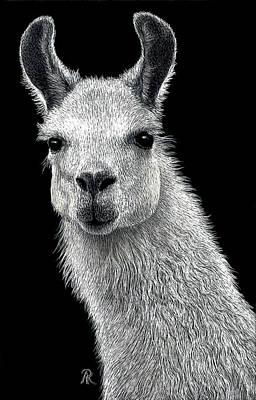 Llama Drawing - White Llama by Ann Ranlett
