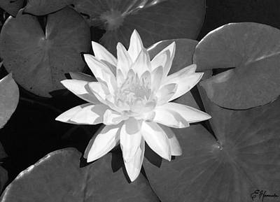 White Lotus 2 Print by Ellen Henneke