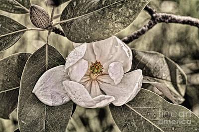 Digital Art - White Magnolia by Lois Bryan