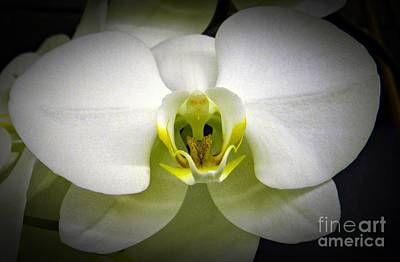 Neurotic Images Photograph - White Orchid by Chalet Roome-Rigdon
