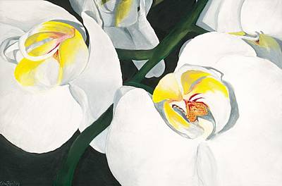 White Orchid Print by Lisa Bentley