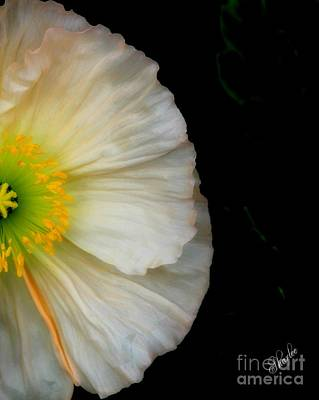 Floral Photograph - White Oriental Poppy by Sharon Johnston