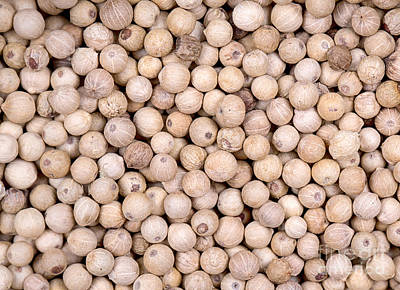 Peppercorns Photograph - White Peppercorn Background by Jane Rix