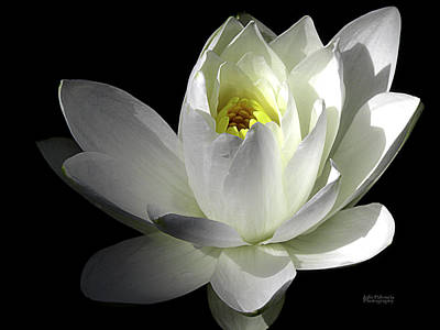 White Petals Aquatic Bloom Print by Julie Palencia