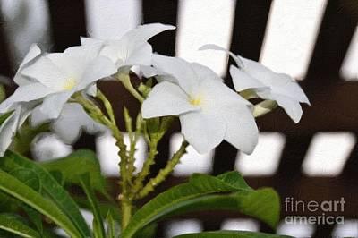 White Plumeria-under The Trellis Print by Darla Wood