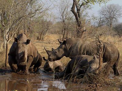Rhinoceros Photograph - White Rhinoceros Ceratotherium Simum by Panoramic Images
