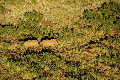 Rhinoceros Photograph - White Rhinoceros (ceratotherium Simum by Pete Oxford