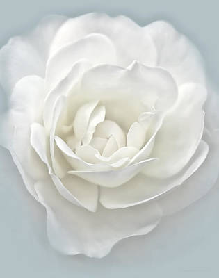 Rose Portrait Photograph - White Rose Flower Silver Blue by Jennie Marie Schell