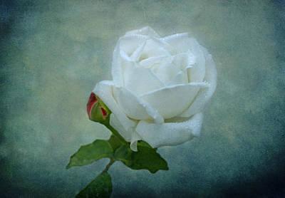 White Rose On Blue Print by Sandy Keeton