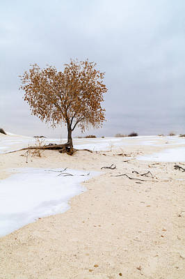 White Sands Lone Tree Print by Brian Harig