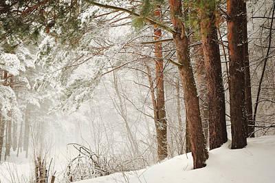 White Silence Print by Jenny Rainbow