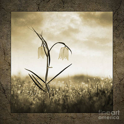 White Snakes Head Fritillary In Morning Dew Print by Tim Gainey