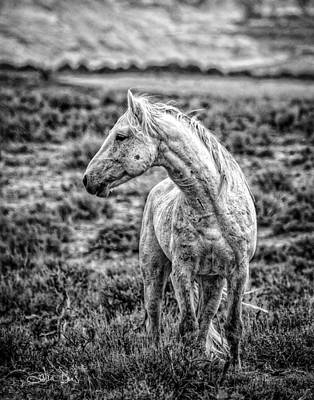 White Stallion Watching Print by Joan Davis