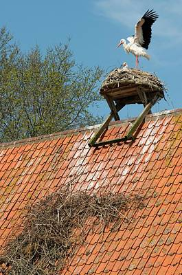 Het Photograph - White Storks by Duncan Shaw