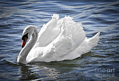 White Swan On Water Print by Elena Elisseeva