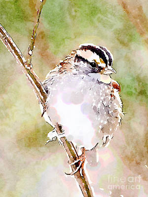 Digital Watercolor Photograph - White-throated Sparrow Digital Watercolor by Kerri Farley