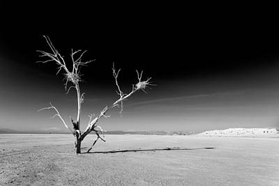 Dry Lake Photograph - White Tree by Peter Tellone