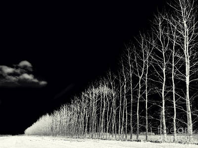Solitude Photograph - White Trees by Stelios Kleanthous