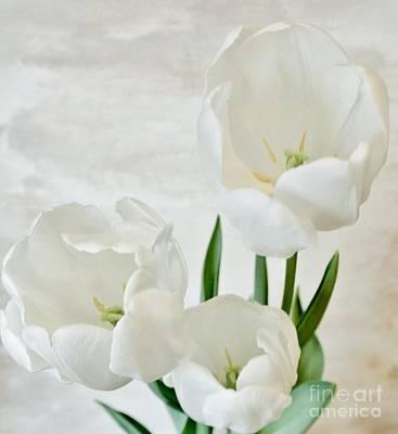 Wrap Digital Art - White Tulips Inside by Marsha Heiken