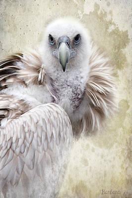 Griffon Digital Art - White Vulture  by Barbara Orenya