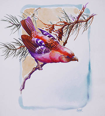 Crossbill Painting - White Winged Crossbill by Shivani Verma