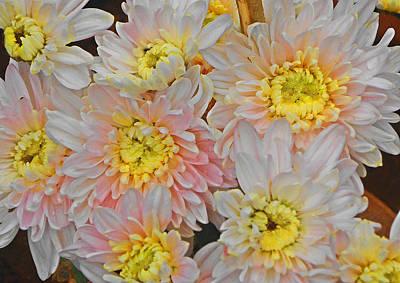 White Yellow Chrysanthemum Flowers Print by Johnson Moya
