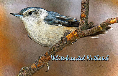 Print featuring the photograph Whitebreasted Nuthatch by A Gurmankin