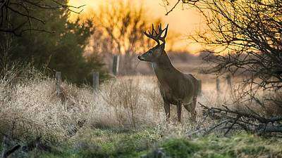 Animals And Earth Photograph - Whitetail Sunset by Garett Gabriel