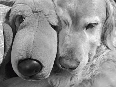 Who Has The Biggest Nose Golden Retriever Dog  Print by Jennie Marie Schell