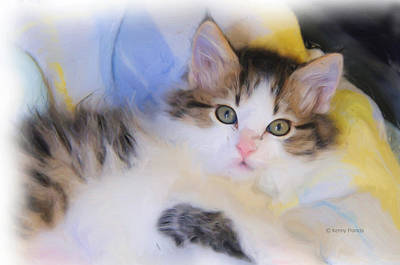 Wide Eyed Kitten Print by Kenny Francis