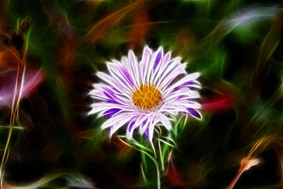 Aster Mixed Media - Wild Aster by Shane Bechler