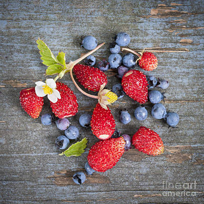 Wild Berries Print by Elena Elisseeva