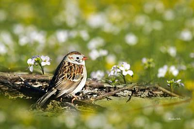 Birds Photograph - Wild Birds - Field Sparrow by Christina Rollo