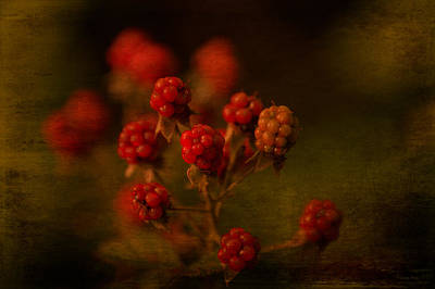 Foe Photograph - Wild Blackberries Waiting To Ripen by Lesa Fine