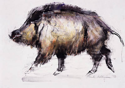 Pig Drawing - Wild Boar by Mark Adlington