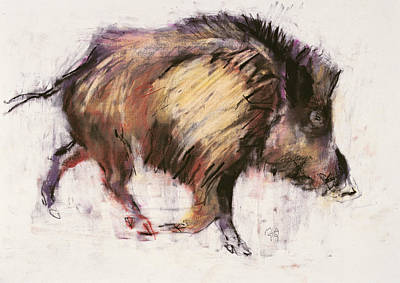 Pig Drawing - Wild Boar Trotting by Mark Adlington