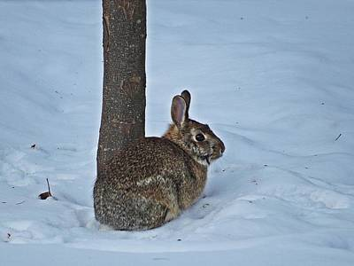 March Hare Photograph - Wild Bunny by MTBobbins Photography
