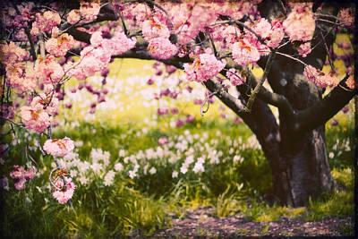 Daffodils Digital Art - Wild Cherry by Jessica Jenney