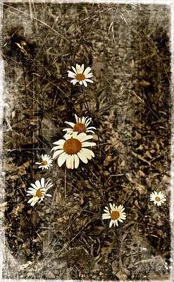 Black Background Mixed Media - Wild Daisies by Bellesouth Studio
