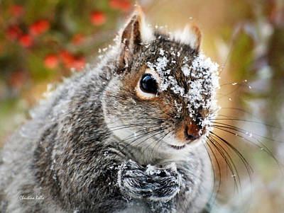 Squirrel Photograph - Wild Expedition by Christina Rollo