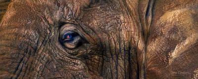 Elephant Mixed Media - Wild Eyes - African Elephant by Carol Cavalaris
