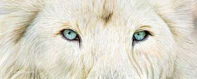 Lion Art Mixed Media - Wild Eyes - White Lion by Carol Cavalaris