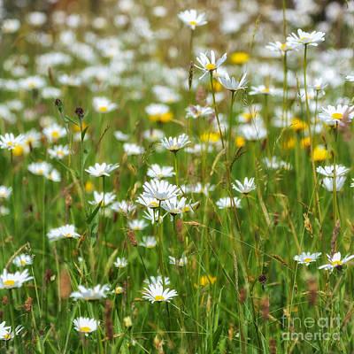 Buttercup Photograph - Wild Flower Meadow by Janet Burdon