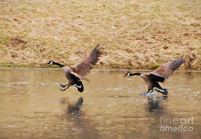 Bird Photograph - Wild Goose Chase by Kerri Farley