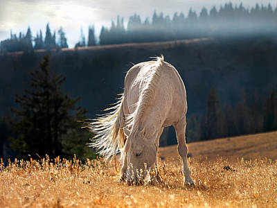 White Horses Photograph - Wild Horse Cloud by Leland D Howard